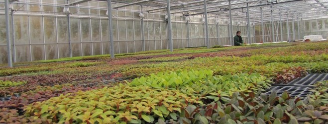Jeunes plants